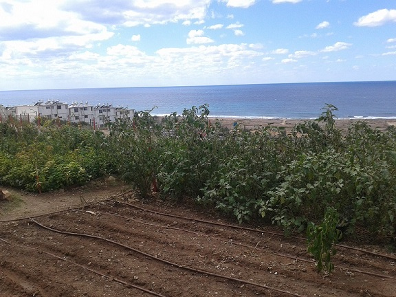 Community Garden on the Mediterranean Coast