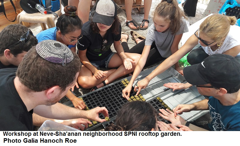 Gardening workshop at Neve-Sha'anan SPNI rooftop garden. Galia Hanoch Roe.