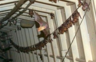 Bats in Abandoned IDF Post