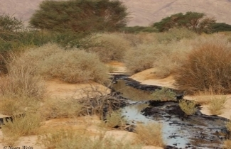 SPNI's Noam Weiss reflects on the Arava Oil Spill at the Evrona Nature Reserve (Photo:Noam Weiss)
