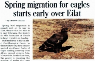SPNI's Israel Ornithological Center is counting migratory eagles