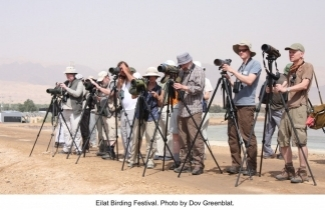 Birding Festival in Eilat. Photo by Dov Greenblat.