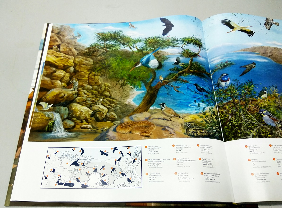 Bringing the Dead Sea to Life -  Art Book