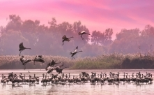 Dawn in the Hula Valley