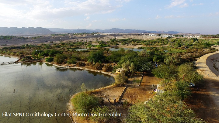 Eilat SPNI Bird Center Photo Dov Greenblat
