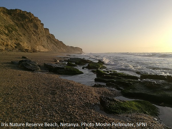 Iris Nature Reserve Beach, Netanya. Photo Moshe Perlmuter, SPNI