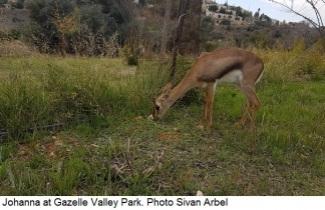 Johanna at Gazelle Valley Park. Photo Sivan Arbel