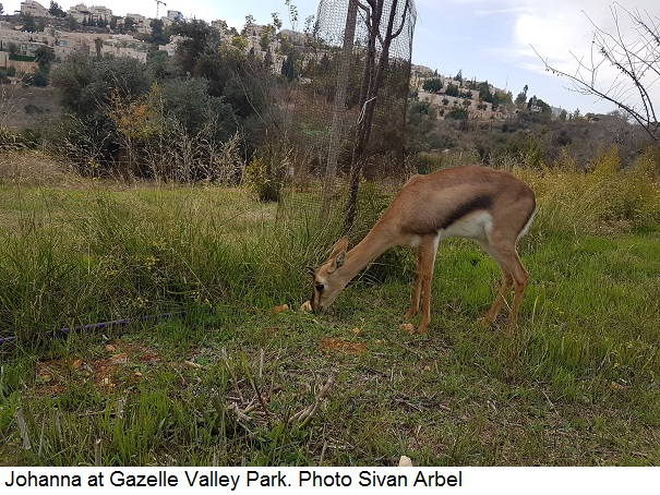 Johanna at Gazelle Valley Park, Jerusalem. Photo Sivan Arbel