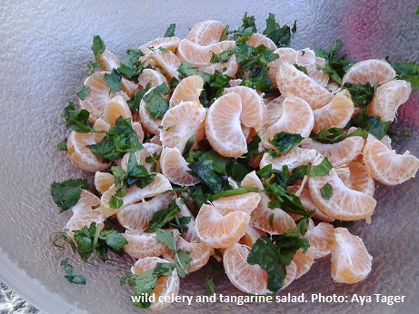 wild celery and tangarine salad